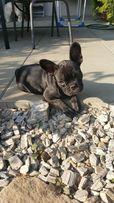 Hotel dla psow Psie Sprawki/ hotelik dla psow / opieka nad zwierzętami