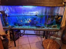 Fish tank with filter canister 100% working order
