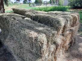 Small lusern bales for sale