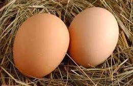Sprzedam wiejskie jaja !
