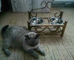 Кормушка, подставка под миски для корма животним.