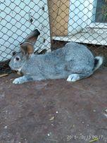 Продам кроликов молодняк и взрослые