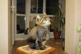 Профессиональная стрижка котов