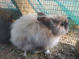 Bunnies looking for a home
