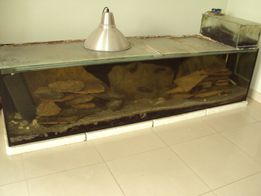 Akwarium 500l z tropheusami.