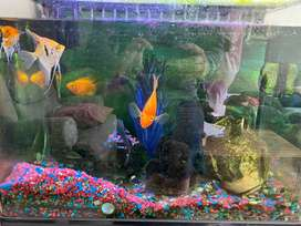 Fish tank and cabinet for sale