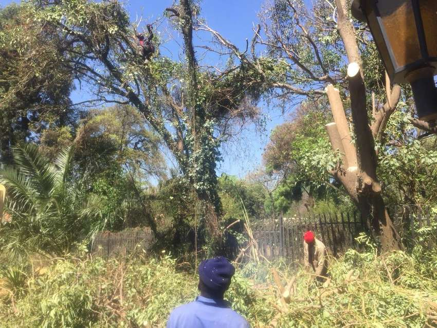 Tree felling with insurance