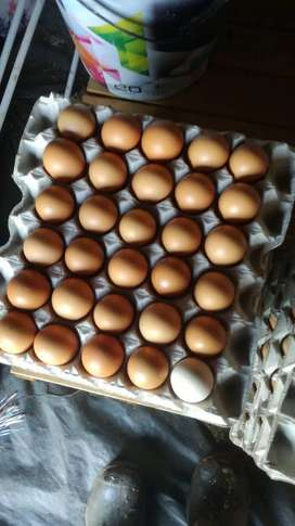 Eggs for sale price 37.50