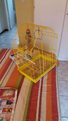 3 beautiful budgies with cage nest and food