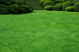 Семена ГАЗОННОЙ ТРАВЫ, газонная трава, от 65 грн/кг урожай 2018