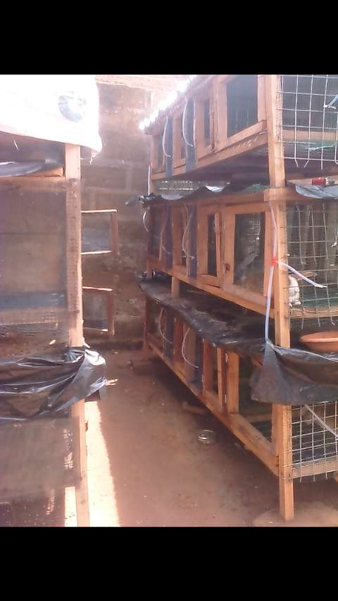 High quality rabbit cage constructed with quality wood and wire mesh 0