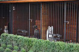 Гостиница для собак кошек разных пород