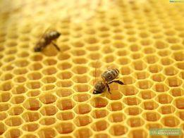 Продам суш для пчел(пасека,рамки)