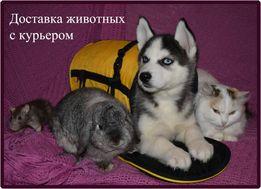 Курьерская доставка животных. Перевозка животных с курьером.