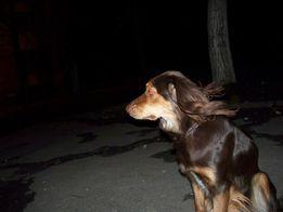Пропала собака, помогите найти