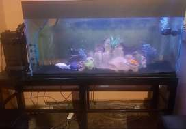 Fish tank + stand and dophin c1600 filter