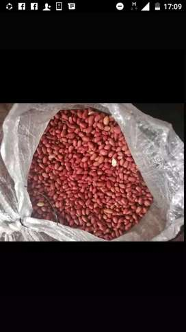 QUALITY BOLD AND JAVA PEANUTS FOR SALE