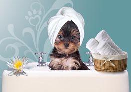 Груминг (стрижка) собак.