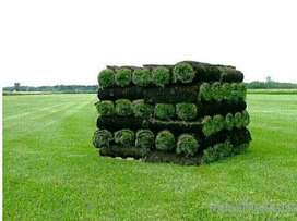 NICE ROLL ON LAWN FROM FARM