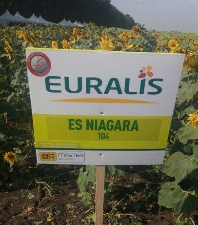 Евралис Ниагара Семена подсолнечника (Euralis ЕС Ниагара, Ніагара)