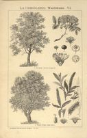 ROŚLINY II oryginalne XIX w. grafiki do wystroju wnętrza