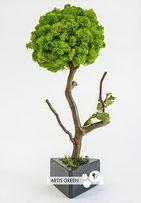 Дерево со мхом стабилизированным