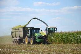 уборка сенажа кукурузы на силос услуги опрыскивателя Сымы