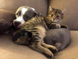 Перетримка собак, котів, пташок в клітках, та інших мілких гризунів.