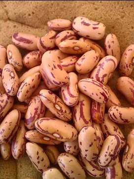 Speckled Sugar Beans on Special, R 25000 per ton