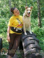 Дрессировка собак мелких пород и беспородных Соломенский р-н г. Киев