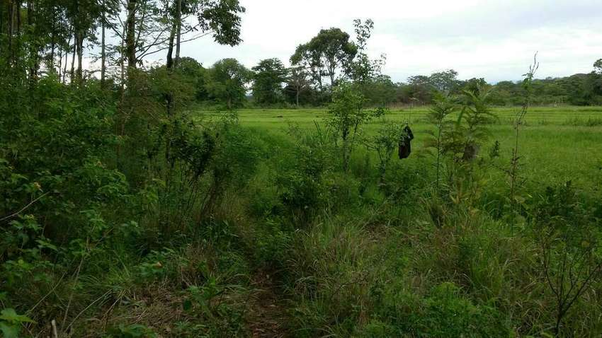 2 Acres in Nyangati Kirinyaga gentle with river for 1.8m each 0