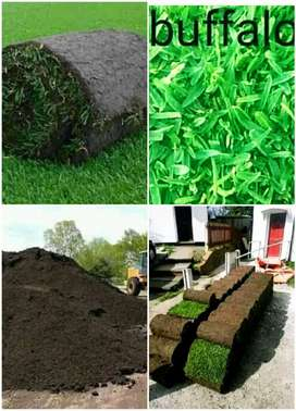 Weed free roll on lawn grass fresh from farm