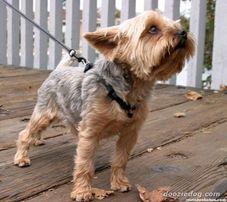 Передержка маленьких собак,гостиница для животных. ТН