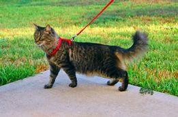 Поводок+шлейка для котов и собак
