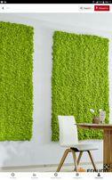 живий мох ,декор стіни, стелі, мебелі,вкриття губчатим мохом ягіль