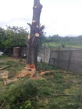 Tree Felling and Stump Removal EL PE KWT