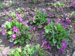 Многолетние растения, многолетние цветы для сада