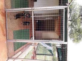 PETS HAVEN LUXURY BOARDING KENNELS FOR DOGS