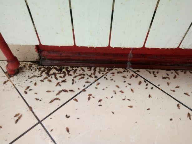 Уничтожение тараканов,постельных клопов,клещей,кротов,крыс,мышей т.д. Киев - изображение 2