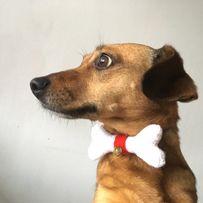 Mucha z dzwoneczkiem dla psa