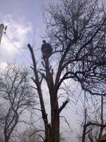 Професcиональное удаление деревьев