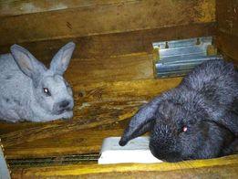 Кролики, Нутрии, Куры, По Доступным ценам