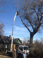 Спил деревьев | Опыт работы 25 лет.