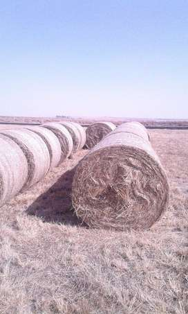 Smutsvinger bales for sale