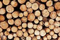 Firewood Service.Fire wood deliveries.Firewood for Sale.100% guranteed 0