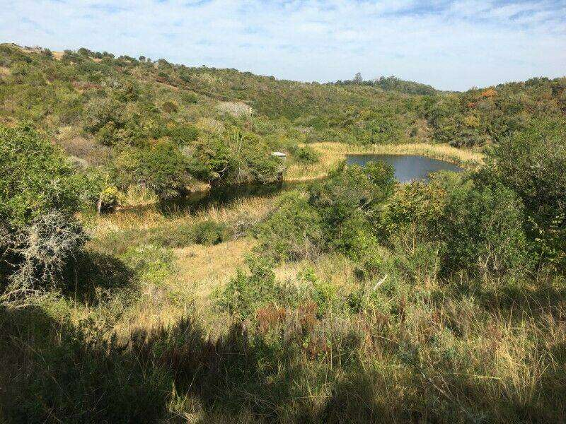 LARGE VACANT SMALLHOLDING IN BATHURST WITH 1 Ha DAM