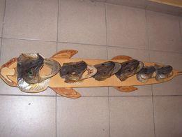 Trofeum ryby drapieżne