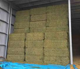 Quality Compressed Lucerne Hay For Sale