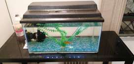 Fish tank with 3 fish and glass table