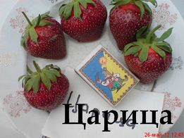 Саженцы, крупноплодной земляники клубники ,Высылаю по Украине.